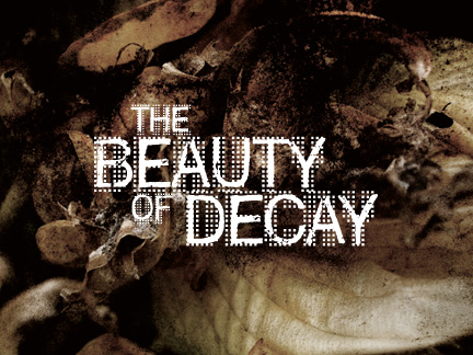 "AUSSTELLUNG ""THE BEAUTY OF DECAY"""